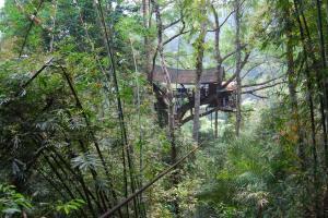 Gibbon Experience (32)