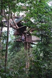 Gibbon Experience (48)