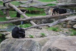 Sydney Zoo (11)