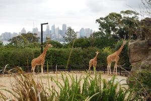 Sydney Zoo (8)