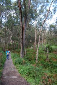 Mount Lofty (6)
