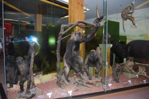 South Australian Museum (4)