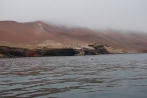 Islas Ballestas (11)