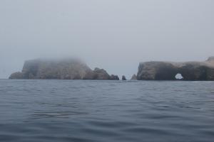 Islas Ballestas (16)