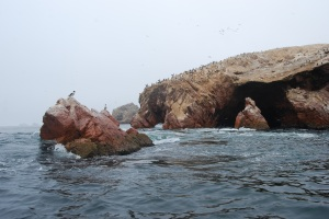 Islas Ballestas (21)