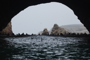 Islas Ballestas (22)