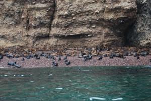 Islas Ballestas (52)