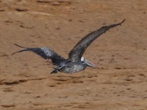 Paracas Reserva Nacional (1)