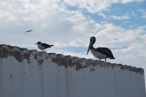 Paracas Reserva Nacional (24)