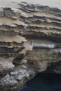 Paracas Reserva Nacional (40)